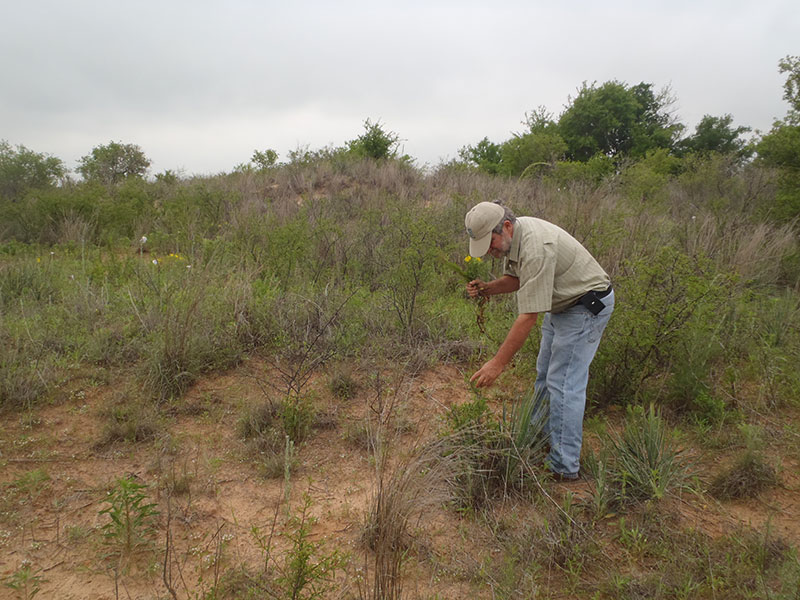 Collecting wildflowers at Ludeke Ranch